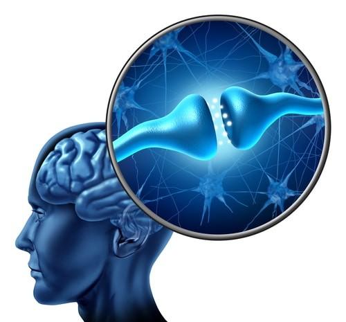 brain_receptor