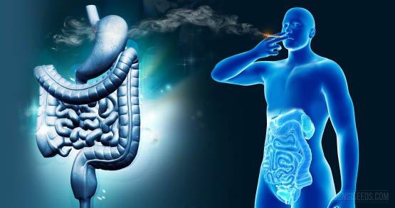 Digestive-system-3