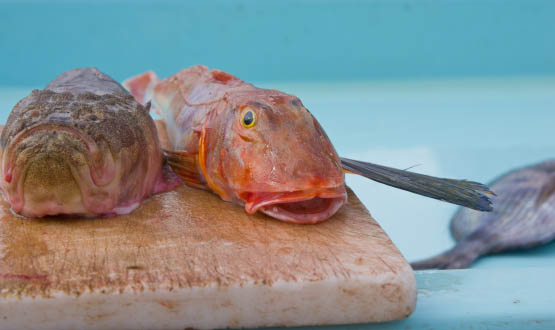 Grondin_rouge,_ou_red_gurnard,_Marseille