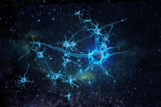 neurones-vitstudio-1200