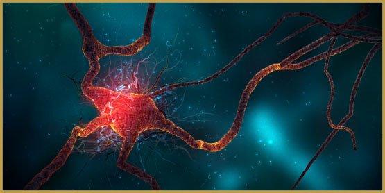 neurogenese-4