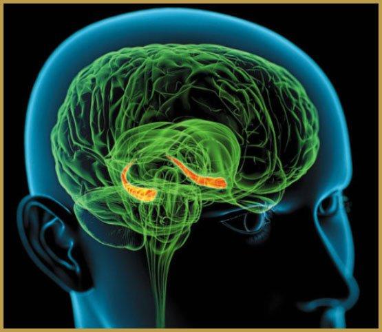 neurogenese-3
