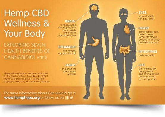 Hemp CBD Wellness Your Body
