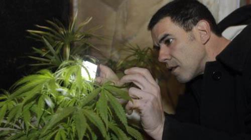Marihuana-Reuters_NACIMA20131104_0174_6