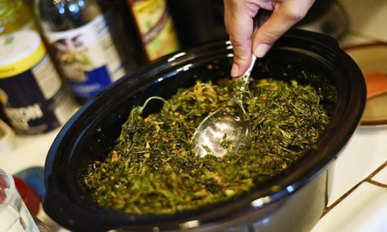 Cannabis_Oil_in_slow_cooker