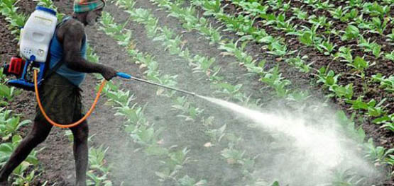 organic-insecticide-spray-570x270