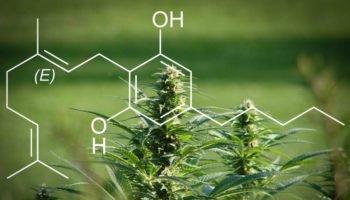 CBG, een nieuwe kant-en-klare cannabinoïde