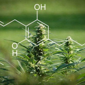 CBG, a new ready-to-use cannabinoid