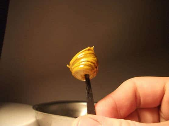 Cannabis_Butane_Honey_Oil
