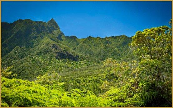 cuidar-cultivos-de-cannabis-en-hawai