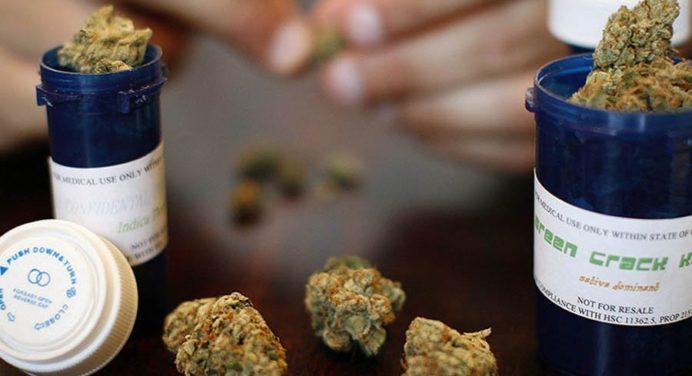 Australië geeft toestemming voor de teelt van medicinale marihuana