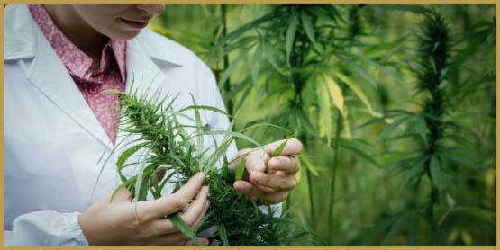 marijuana-science-cannabis-plant-research