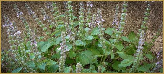 лекарственные травы-27-