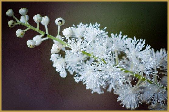 лекарственные травы-16-