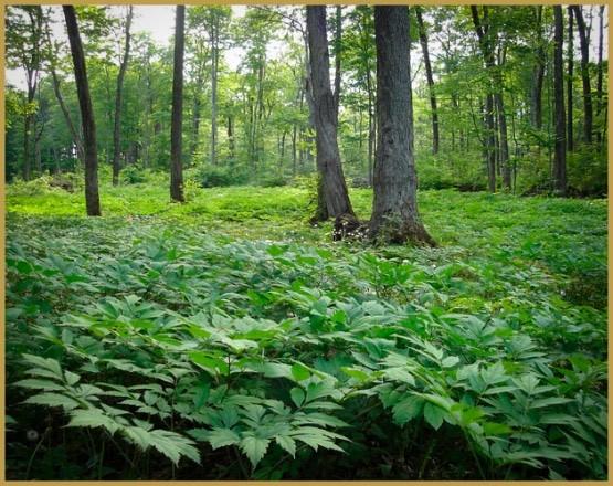 лекарственные травы-11-