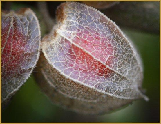 medicinal-herbs-8