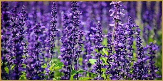 medicinal-herbs-2