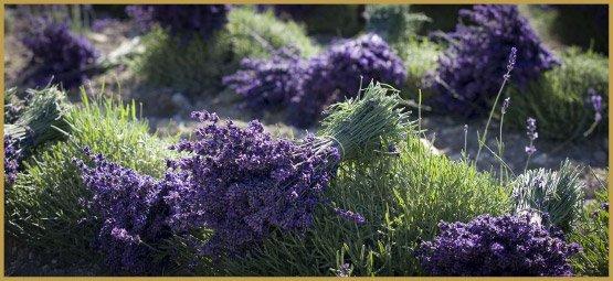 лекарственные травы-9-