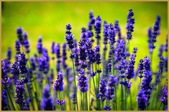 лекарственные травы-22-