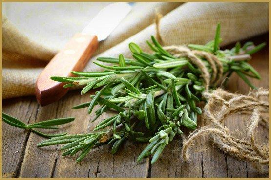 лекарственные травы-25-