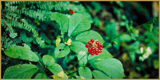medicinal-herbs-1