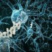 THC confirmé contre la maladie d'Alzheimer
