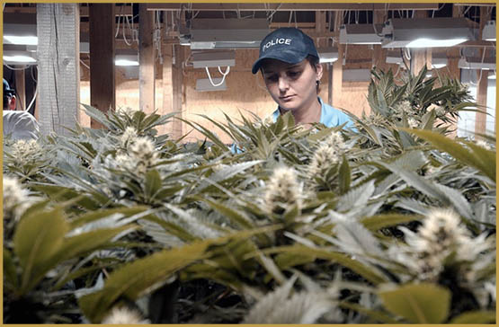 asset-version-af009f0f1b-cannabis_val_de_travers_cg