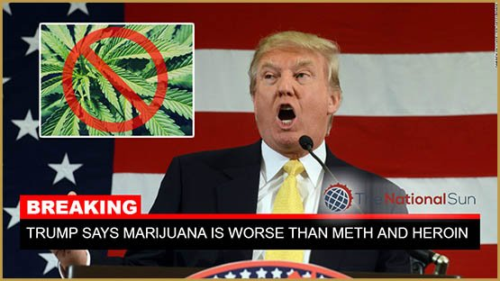 donald-trump-marijuana-is-worse-than-meth-and-heroin-combined