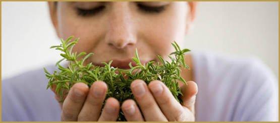 phytotherapie-pourquoi-ca-marche_imagepanoramique647_286