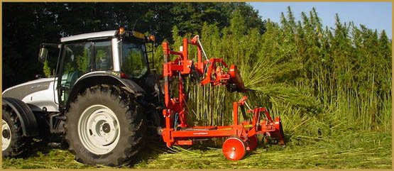 virginias-first-hemp-harvest-70-years