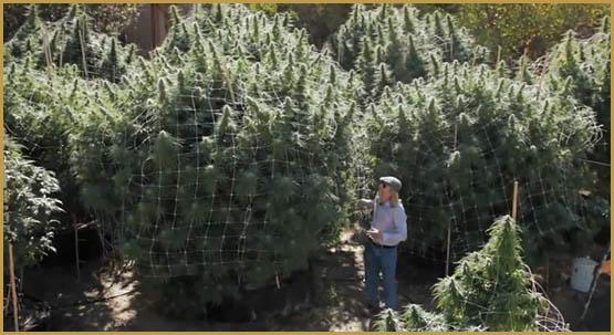 canabis-therapeutique-nord-californie