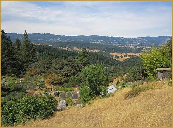 ferme-willits-californie