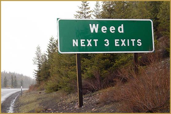 weed-highway-sign-2