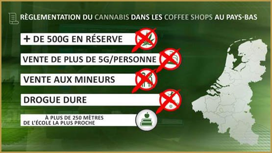 cannabis-reglement-pays-bas