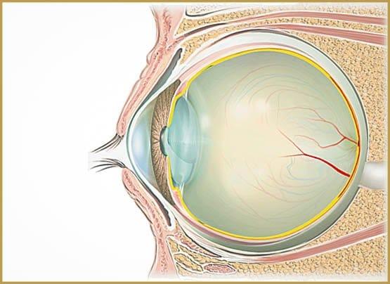 1002100-retine