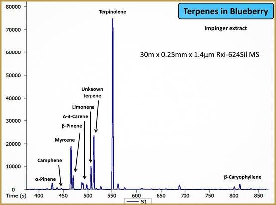terp-blueberry-1024x764