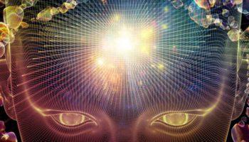 La psilocybine favorise la croissance de nouvelles cellules du cerveau