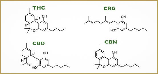 what-are-cannabinoids-e1480481986557
