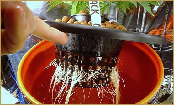 hydroponic-system-cannabis