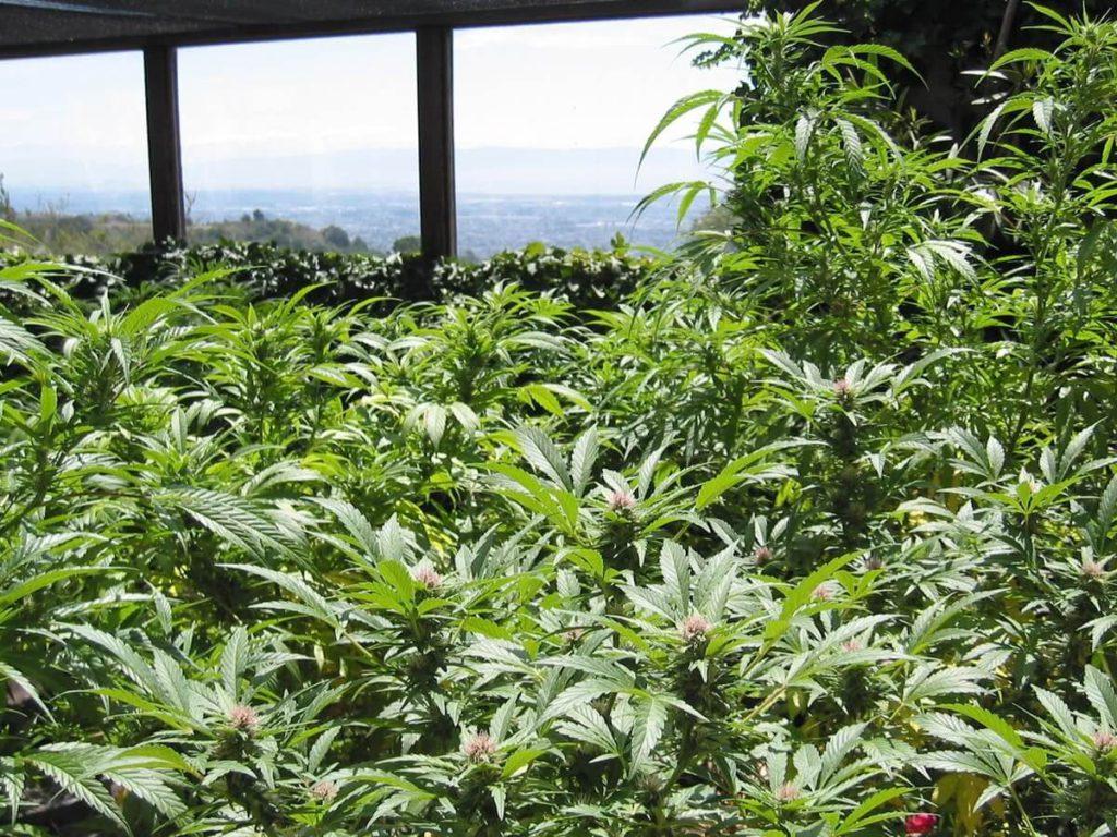 Culture organique : voici 3 produits bon marché pour mettre à niveau vos plantes