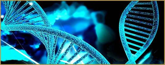 Génotype et phénotype