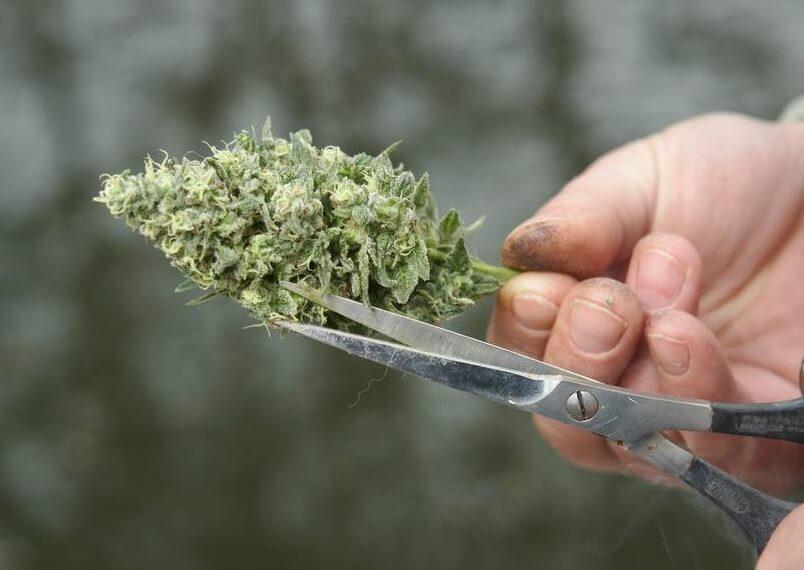 site de rencontre pour les fumeurs de mauvaises herbes Royaume-Uni sites de rencontres en ligne République dominicaine