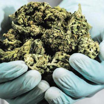 Israël exporte sa production médicale de cannabis