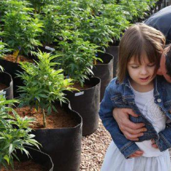 L'exode vers les contrées du cannabis médical