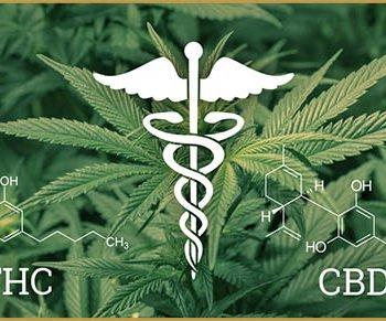 Les principaux cannabinoïdes