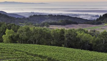 Калифорнийские виноделы готовятся к марихуане