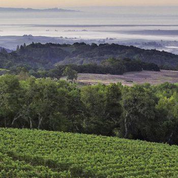 Des vignerons californiens se préparent à la marijuana