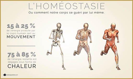 homéostasie