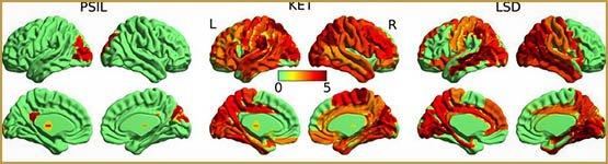 Les psychédéliques produisent un état de conscience «supérieur»