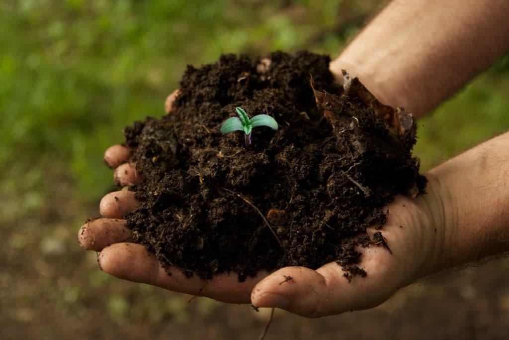 6 questions les plus courantes posées par les Growers débutants